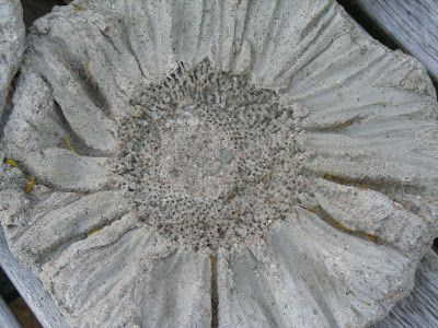 The concrete sunflower...