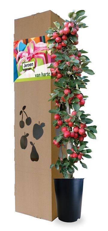 Of het nu gaat om een verjaardag, lustrum, jubileum of bijvoorbeeld  het behalen van een diploma, de gelegenheid vraagt om een bijzonder cadeau! Deze mini appelboom is een blijvende herinnering tijdens bloesem en oogst.  http://www.minitree.nl/geschenkboom/19-felicitatieboom