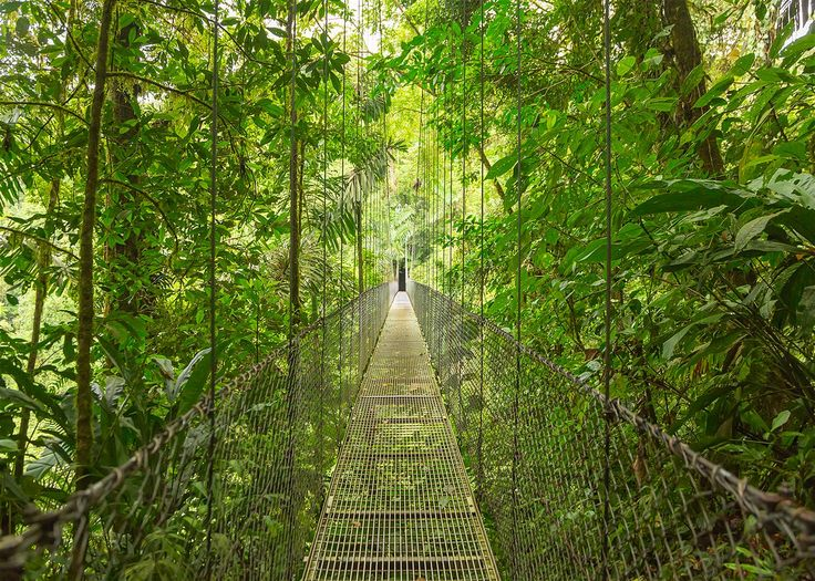 Monteverde and Santa Elena are jumping-off points for an unforgettable adventure in Costa Rica's cloud forests © DmitriyBurlakov / Getty Images