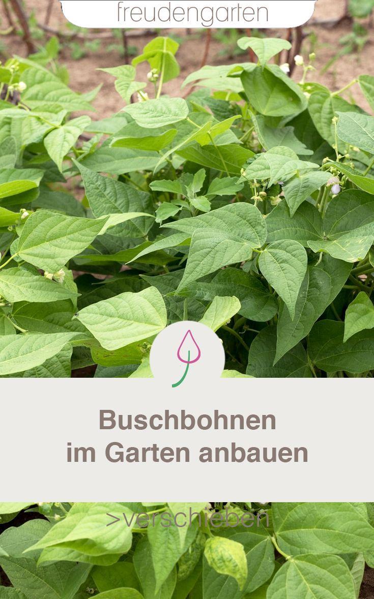Gemuse Saen Pflanzkalender Dein Hochbeet Garten Im April Gardening