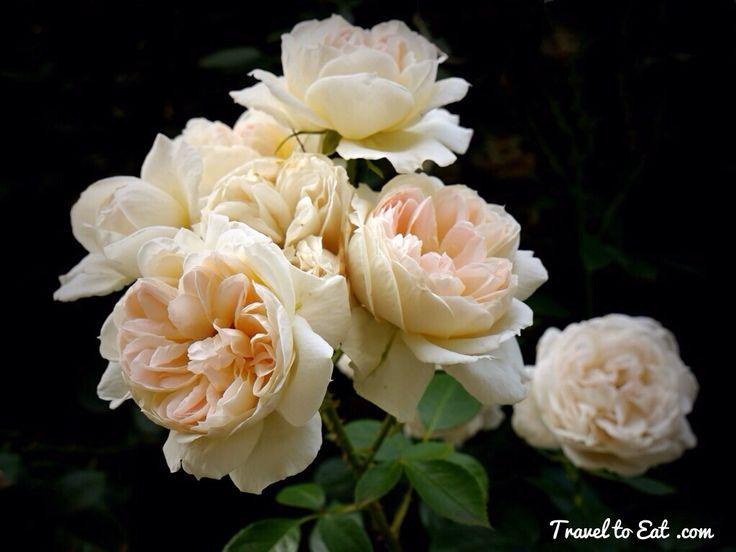 Attractive Mon Jardin Et Ma Maison #13: Mon Jardin Et Ma Maison Rose Introduced In France By Meilland Richardier In  1998. Bagatelle