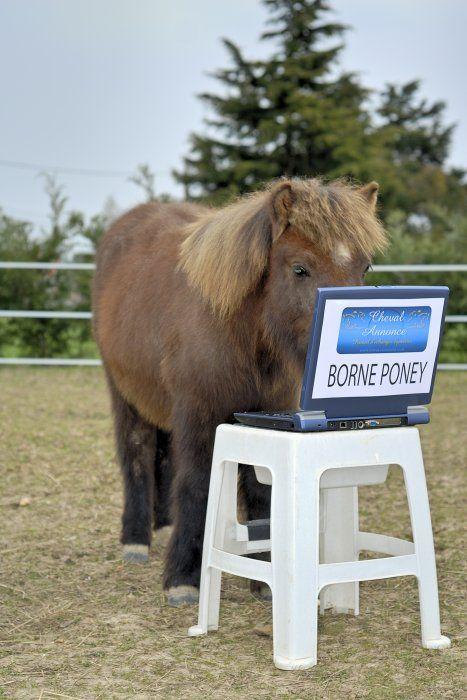 Alors, qu'est ce qui se raconte sur CA aujourd'hui ? #ca #chevalannonce #cheval #poney