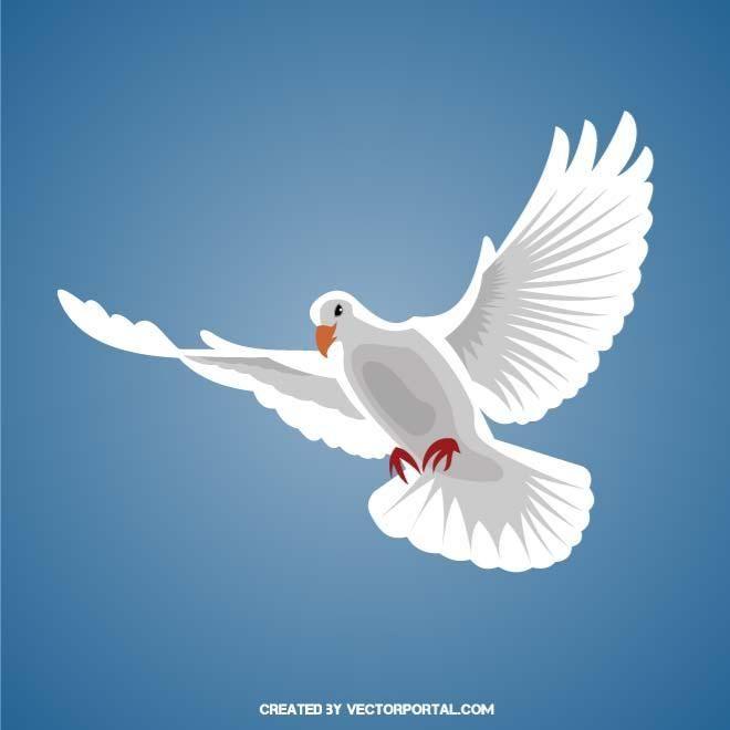 White Dove Vector Image White Doves Doves Cry White Pigeon