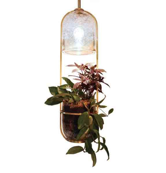 23 best led grow lights images on pinterest plants hanging led bulbs in hand blown glass bulbs to light the plants suspended from them by workwithnaturefo