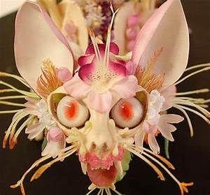 25+ best ideas about Strange Flowers on Pinterest ...