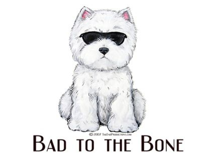 Bad to THE BONE! #kitchen #Sink I've got two of them. Really sweet but little rebellious, especially when digging in yard! #Dogs #Westie #Breeds