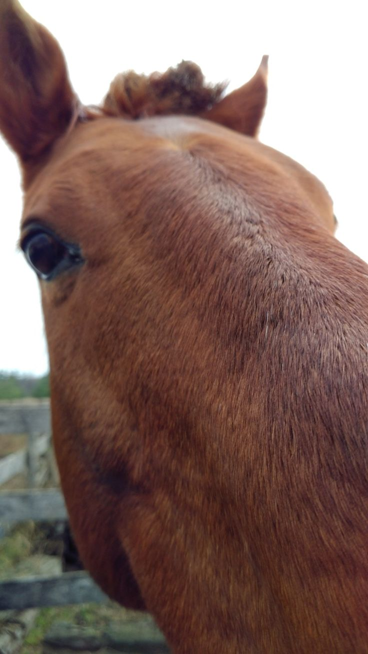 Ultimate close up of Henny