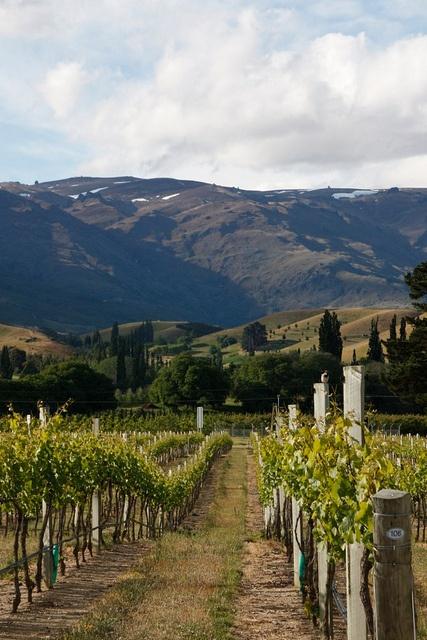 Central Otago vineyards