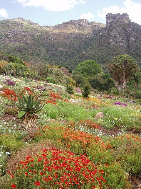 Kirstenbosch National Botanical Garden - Cape Town, South Africa