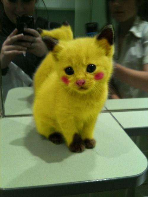 poor kitty - pikachu