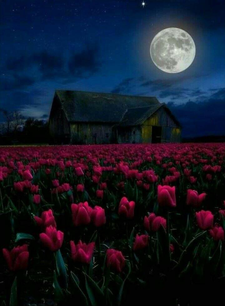 время сборов смотреть фото цветочного полнолуние зря