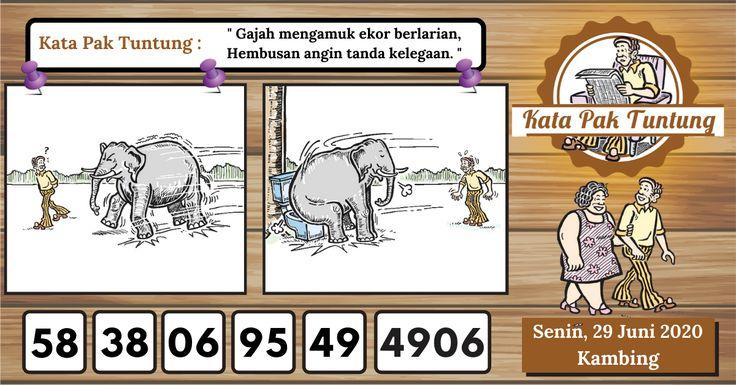 46 Mimpi gajah togel terbaru
