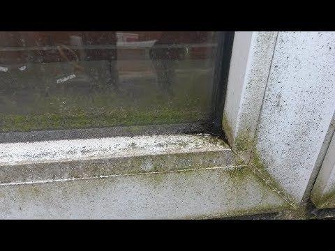 Bevorzugt Insektendreck von Fensterrahmen & Fensterbank entfernen QM62
