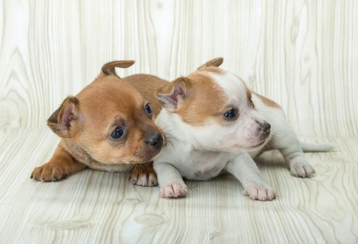 puppy mills informative For dog lovers around the world, one of the most frustrating and devastating realities we have to face is that of the continued existence of puppy mills: large-scale breeding operations where the number one consideration is profit, instead of the well-being of dogs.