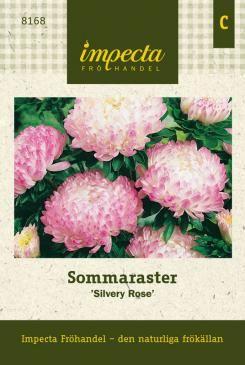 Sommaraster | Ettåriga blomsterväxter | Callistephus chinensis 'Silvery Rose' |