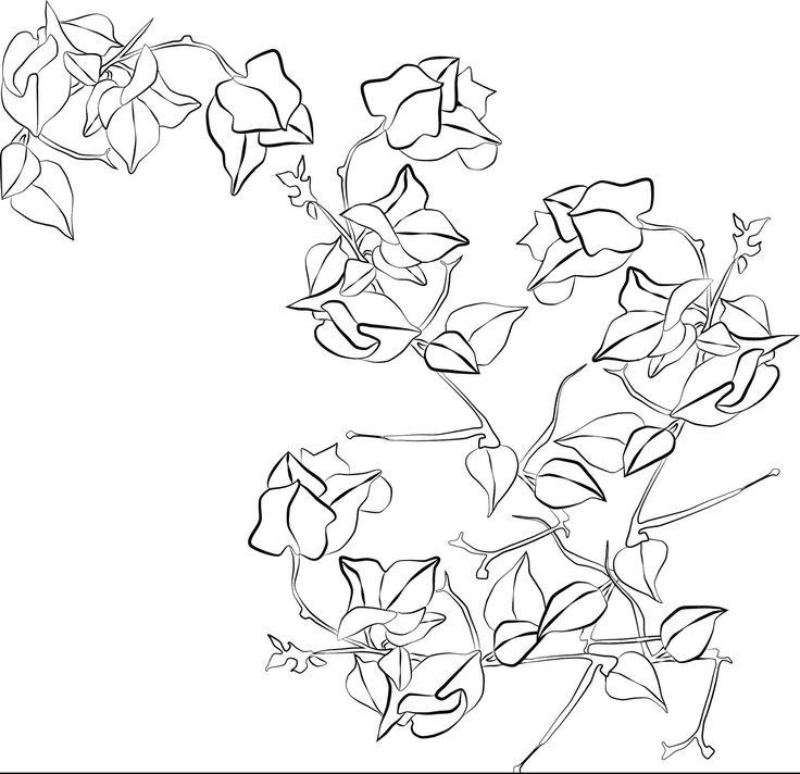 Bougainvillea Line Drawing
