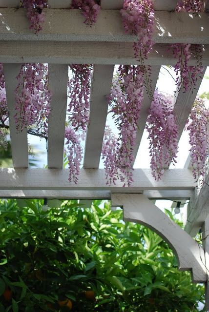 Wisteria arbor...I have the wisteria now I just need the arbor