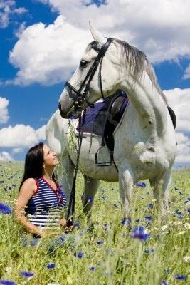 sport equestri con un cavallo sul prato Milano Giorno e Notte - We Love You! www.milanogiornoenotte.com