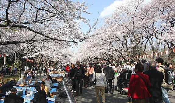 Ueno Park - Tokyo Temples and Art museums! BRING CAMERA Bentendo temple during cherry blossom season has markets