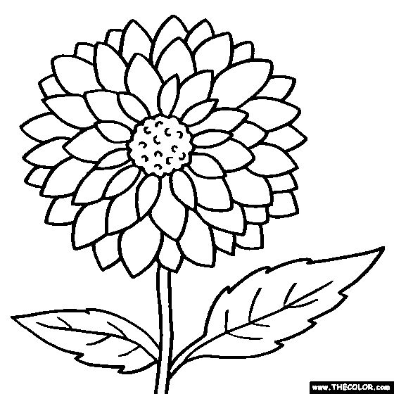 dahlia flower coloring page printable - Kids Coloring Pages Flowers