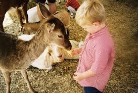 Petting zoo - petting a deer - Petting zoo animal rental - Irvine, Riverside, LA, Orange County, Santa Ana, and surrounding areas! Newport Beach, Anaheim - children's zoo