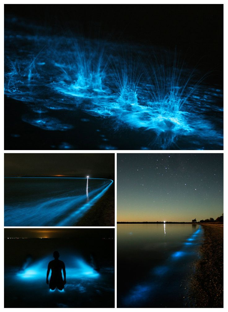 Bioluminescence in the Gippsland Lakes east Gippsland, Victoria, Australia