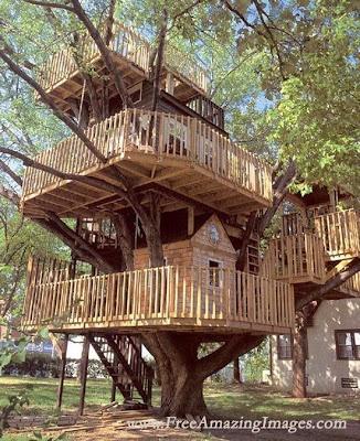 tree houses.2