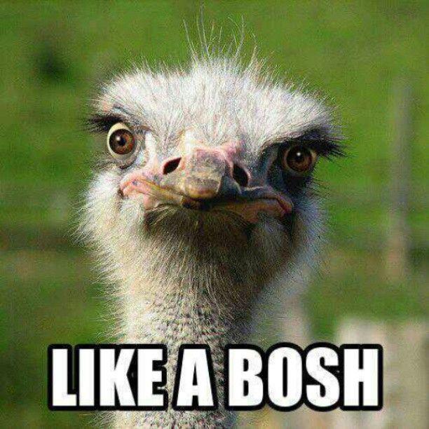 chris bosh ostrich - photo #14