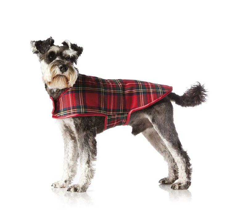 Hjälp din hund att hålla värmen i vinter och sy själv ett fint täcke.