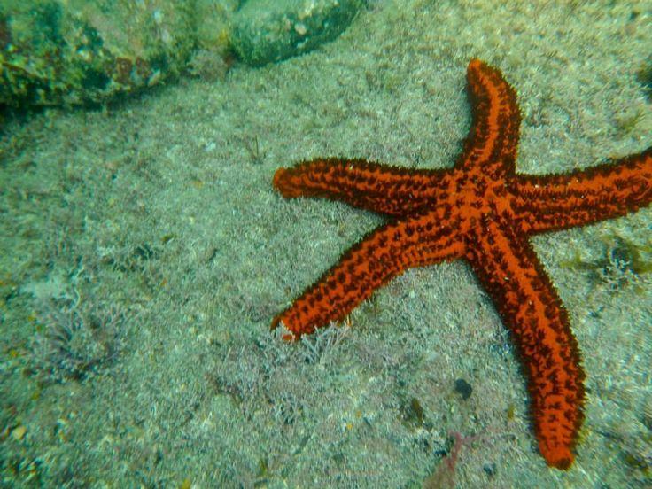 Estrela do Mar em Ilhabela - SP
