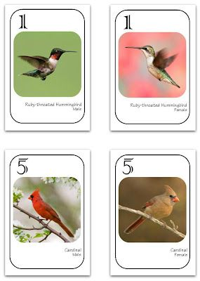 Go Birdwatching! [Free Printable Game] from Relentlessly Fun, Deceptively Educational