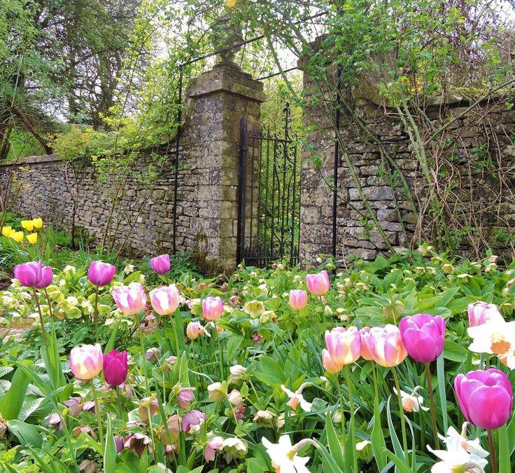 209 best spring flowers images on pinterest dream garden cerney house gardens gloucestershire england mightylinksfo