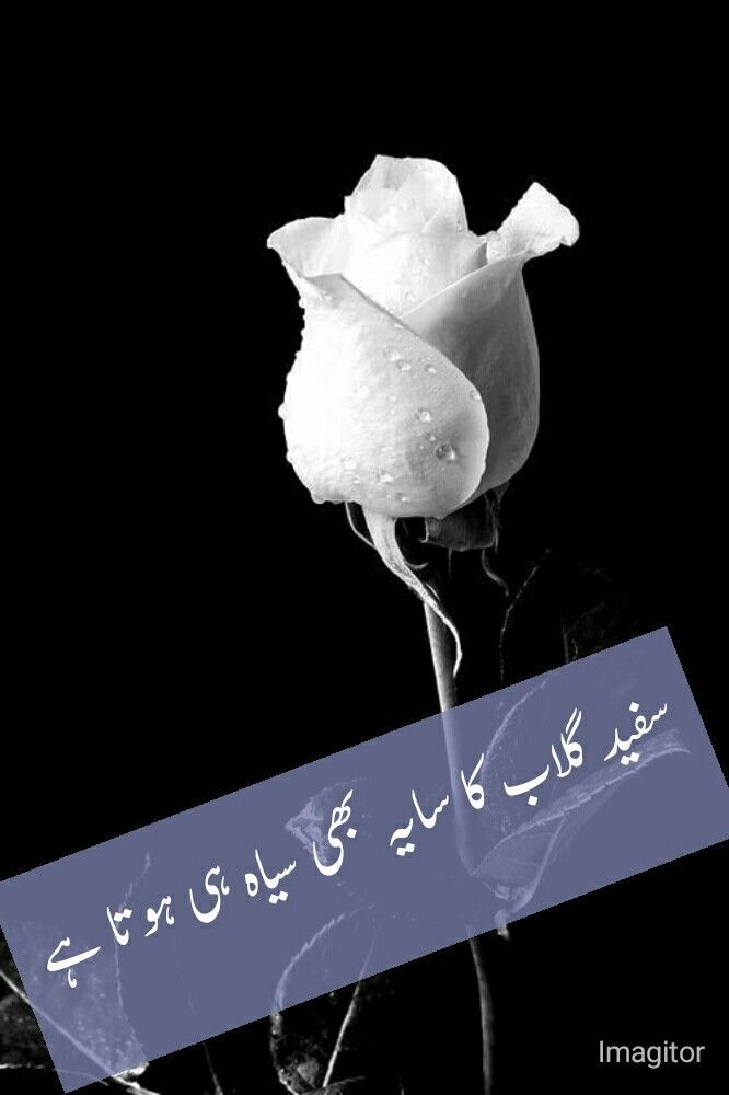 Pin By Adeeba Sulehri On One Line Feelings Urdu Quotes Quotes