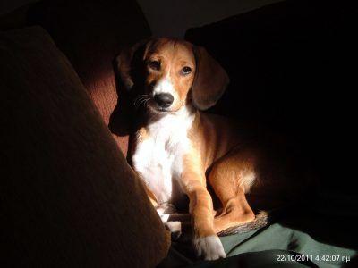 Το video μου την Παγκόσμια Ημέρα των Ζώων - Τα ΣκυλοΝέα Της Μάρσας