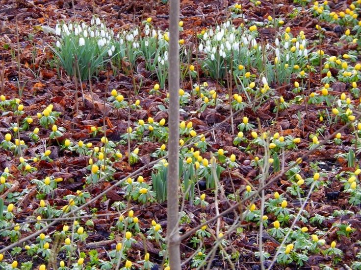 early springflowers