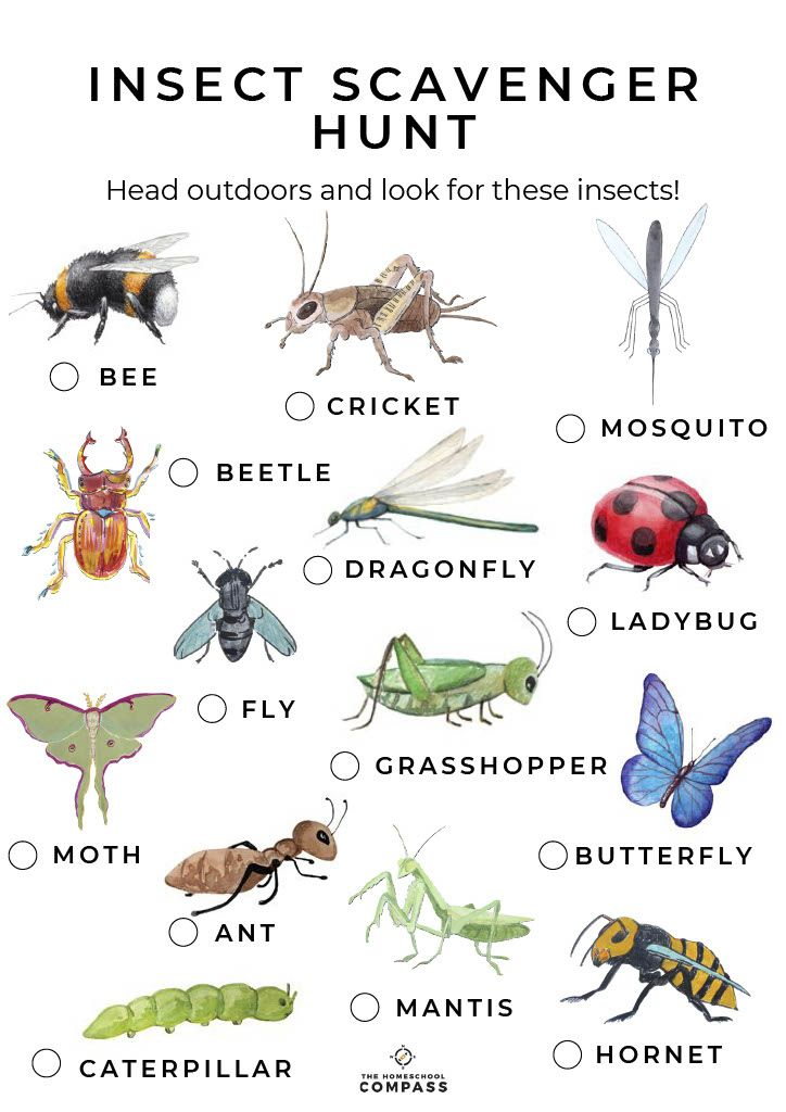Pin By Evelyn Saenz On Insects Insects Insects Preschool Minibeasts