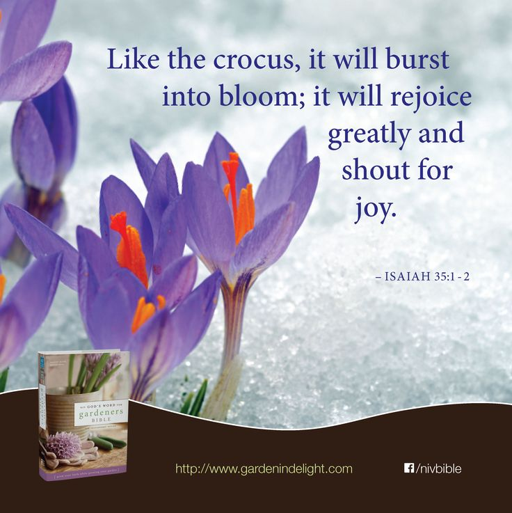 Wonderful It Will Rejoice Greatly And Shout For Joy. Isaiah 35:1 2 (. Rooftop  GardensScripturesBibleJoyBibliaRoof TerracesRoof GardensBible VersesGlee