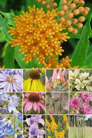 37 Plant Low Growing Garden (for dry sandy to medium loam soils in full sun)