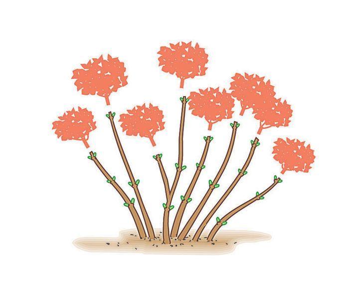 die besten 25 hortensie ideen auf pinterest hortensien hortensie und hortensien pflege. Black Bedroom Furniture Sets. Home Design Ideas