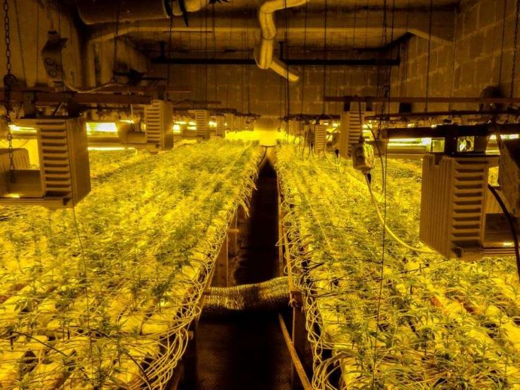 In dieser Anlage konfizierte die Polizei 10'000 Hanfpflanzen