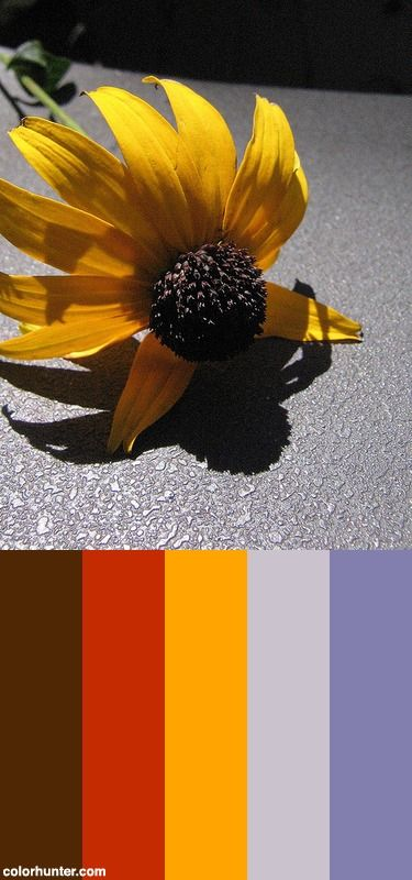 Flower's Shadow Color Scheme