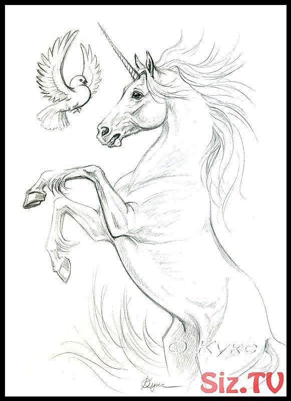 Bleistift A4 2008 Jahriges Papier A42008jahriges Bleistift Gemaltebuntstift Papier Einhorn Zeichnen Pferdezeichnungen Pferde Zeichnen