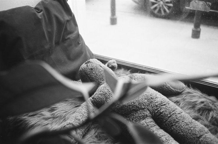 Bear #ricoh #ricoh500me #analogfeatures #analoguephotography #filmisnotdead #analog #35mm #fotografiaanalogowa #klisza