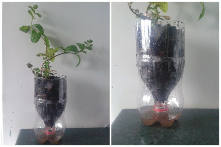Old Coke Bottle to a Plant Filter made with a 1.5l plastic coke bottle. Just take it apart when you need to empty out the water. It's AMAZING!