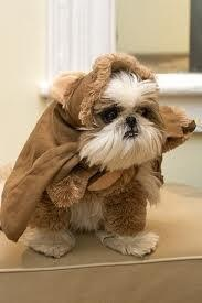 ewoks do exist!!!  Looks like my little Gizmo.