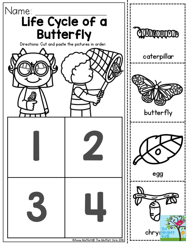 Image result for sequencing butterfly life cycle