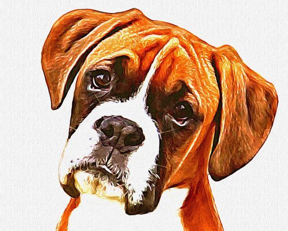 Etsy listing at https://www.etsy.com/listing/192171095/boxer-with-that-boxer-expression-8x10