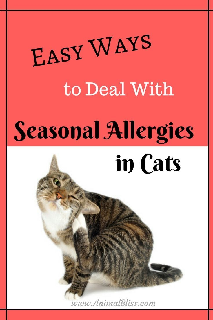 Easy Ways To Deal With Seasonal Allergies In Cats Cat Allergies