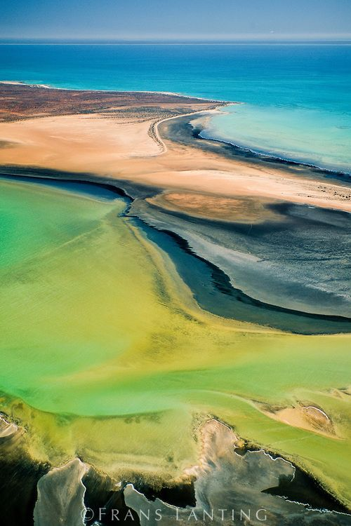 Beaches and shallow water (aerial), Shark Bay, Australia © Frans Lanting