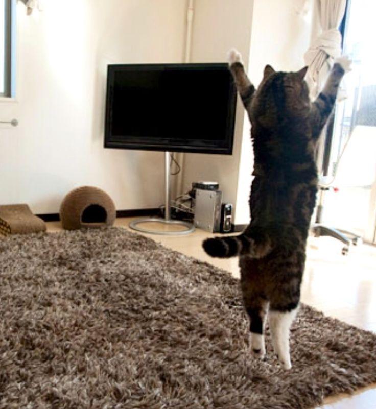 Good Morning Sunshine Jack Grunsky : Good morning sunshine cat funny animal pics mornings